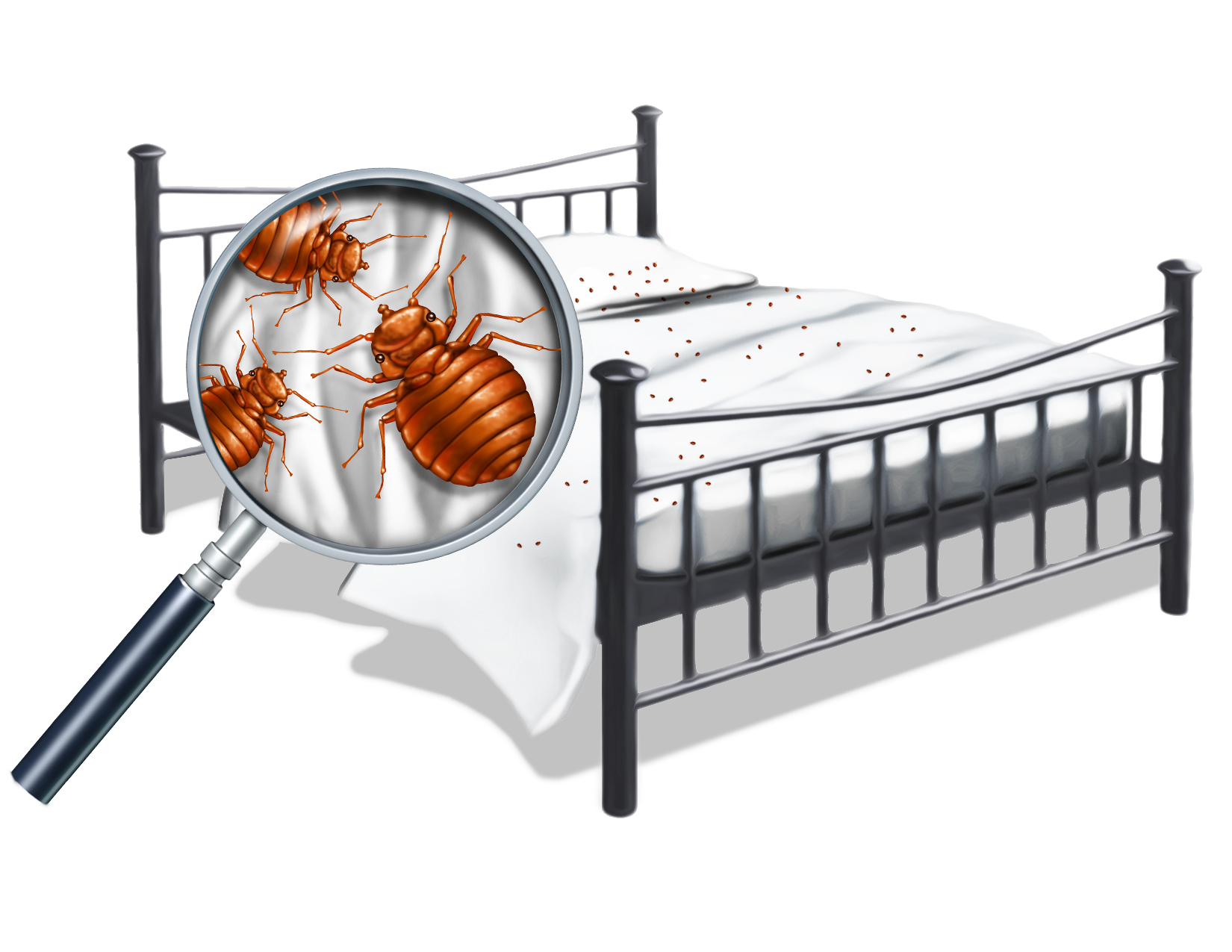 Bed Bugs at Home!